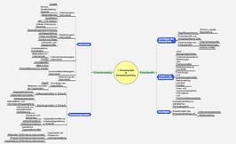 Mind Maps Fachkaufmann Einkauf und Logistik