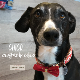 CHICO SET Halsband & Fliege