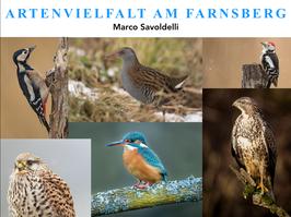 """Beamershow """"Artenvielfalt am Farnsberg"""" verkürzte Version ca. 25 Min"""