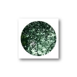 Baum im Kreis IV