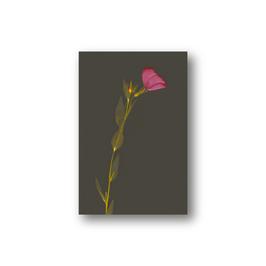 Floralis_IV