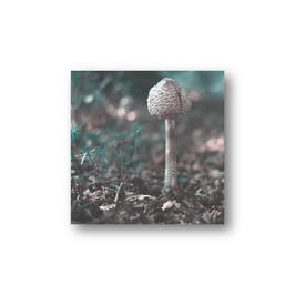 Babyparasol
