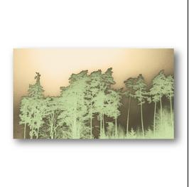 Wald Schatten