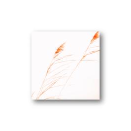 Schilfblüten im Wind, zwei Varianten
