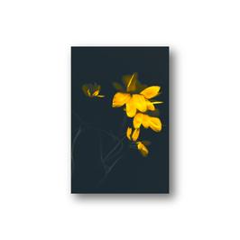 Floralis V