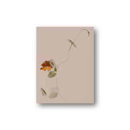 Floralis  II