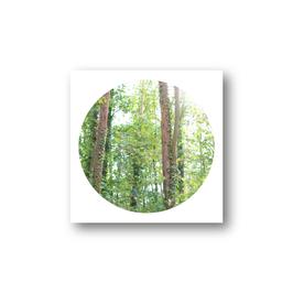 Baum im Kreis III