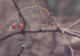 Naturkarte - LOVE