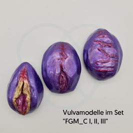 """Vulvamodelle im Set """"FGM_C I, II, III"""""""