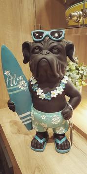 Bouledogue surfeur
