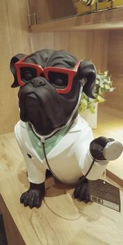Bouledogue docteur