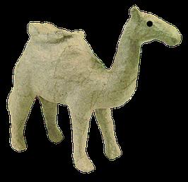 Kleines Kamel