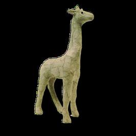 Kleine Giraffe