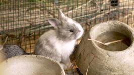 Spenden Sie ein Kaninchen