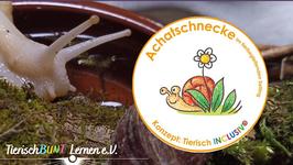 Trainer Achatschnecken in der tierbegleitenden Förderung und Setting - Zertifikatslehrgang AAA/AAE/AAT