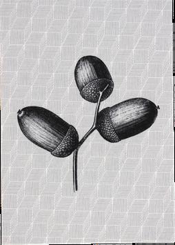 Postkarte drei Eicheln (ohne Text)