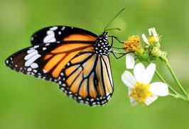 Der Schmetterling Code