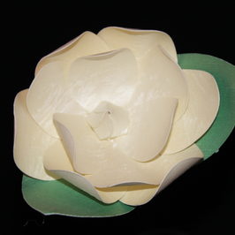 Gardenia / Gardenia