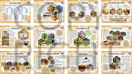 """Der persönliche Bienenlehrpfad im """"neutralen Design"""" 12-teilig"""