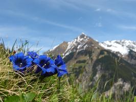 Alpenzeit