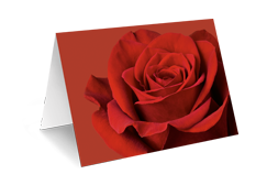 Karte rote Rose ( Neutral ohne Text)