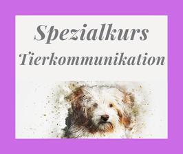 Spezialkurs Tierkommunikation - Start am 1. November 2021