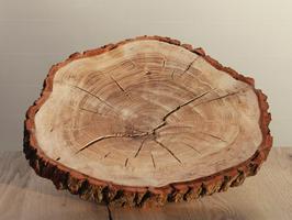 große Baumscheibe aus Eiche Ø30-35cm