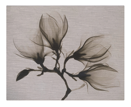 Magnolia X-Ray Floral
