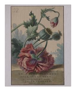 No 7 Flower Ad