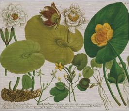 Folio 1 Botanical