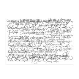 Clear Stamp *gemischte Typo*