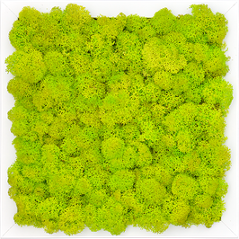 TOUCH GREEN Moosbild 50x50cm Frühlingsgrün