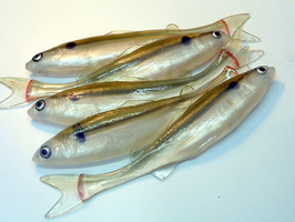 Tomy's Bait Handmade Lures: Grayling Shad 17 cm