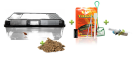 Triops Weihnachtsedition gross