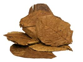 Seemandelbaumblätter L oder XL