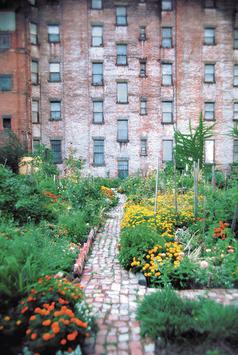 Urbane Permakultur - Einführungskurs