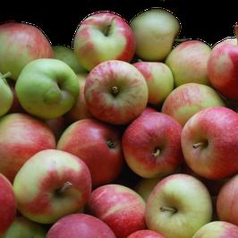 Querfeld 3kg Kinderäpfel