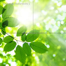 Deckenbild 1 für Rasterdecke