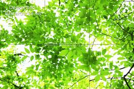 Deckenbild 48 für Rasterdecke
