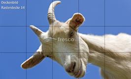 Deckenbild Produkt 14 für Rasterdecken/Systemdecken