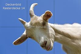 Deckenbild 14 für Rasterdecke