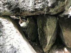 Excursion to the caves of San Bernardo de Claraval