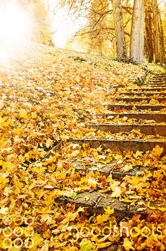 Linz  Herbstlaub 004