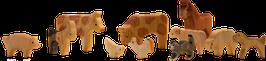 11 eläimet