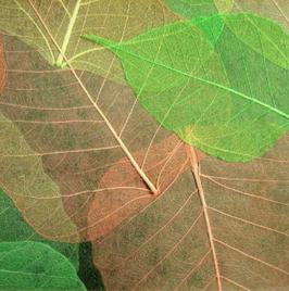 """echte Blatt Tapete """"Fuji"""", grün"""