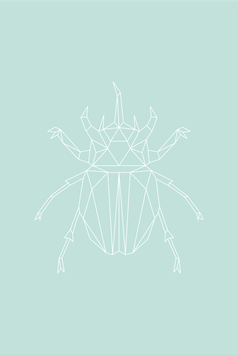 Nashorn-Käfer