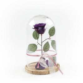 Beauty Bella (Purple)