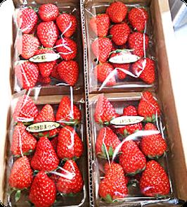 常果園産 夢の香 イチゴ 4P