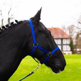 Halfter für Pferde in Shetty, Pony, Vollblut, Warmblut, Kaltblut