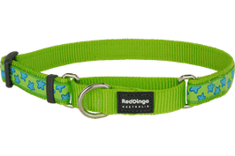 Red Dingo Martingale Dog Collar Turquoise Stars On Lime Green